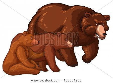 Bear family with little cub illustration