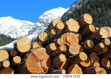 Large Logs Cut By Loggers In The Mountains