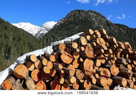 Woodpile With Large Logs Cut By Loggers In The Mountains