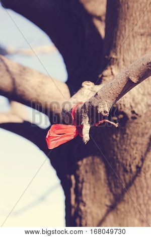 A piece of red plastic is tied to a tree branch resembling a bow.