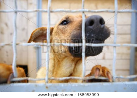 Abandoned dog in the kennelhomeless dog behind bars in an animal shelter.Sad looking dog behind the fence looking out through the wire of his cage.