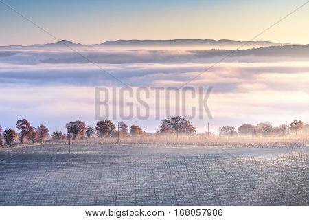 Tuscany foggy winter panorama rolling hills and vineyard on blue morning. Italy Europe
