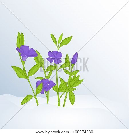 Beautiful spring background with periwinkle in snow. Greeting cards congratulations with spring or Women's Day. Holiday poster or placard template in simple cartoon style. Vector illustration. Flower Collection.