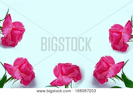 Bright colorful flowers rosebuds. Holiday congratulation card.