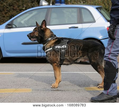 Police Dog To Hunt Down Drug Dealers Or To Detect Explosives