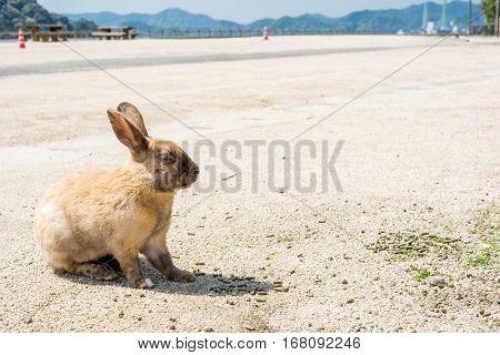 A rabbit sitting sideways on a sandy ground