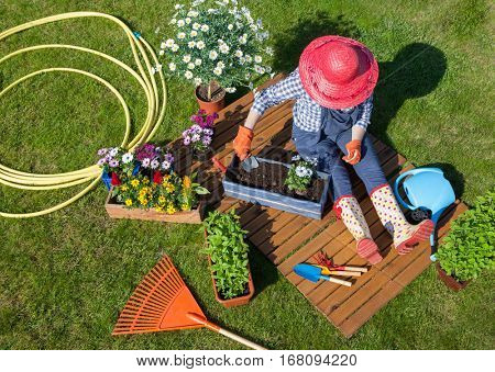 Woman sitting on the lawn, wearing gloves, straw hat potting  flowers. Gardening concept.
