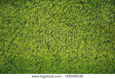green grass background at Bangkok in Thailand