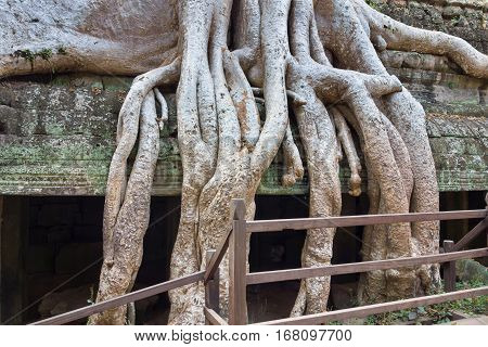 big roots of a tree of an abstract interlacing