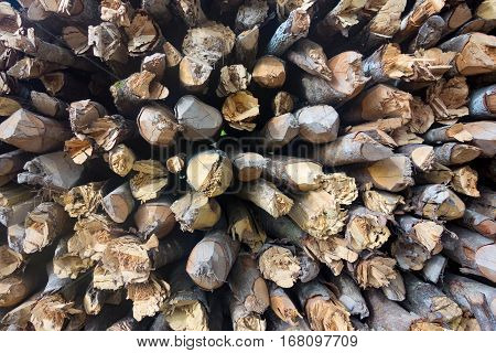 chaotic heap from wooden stakes or from wooden sticks and firewood