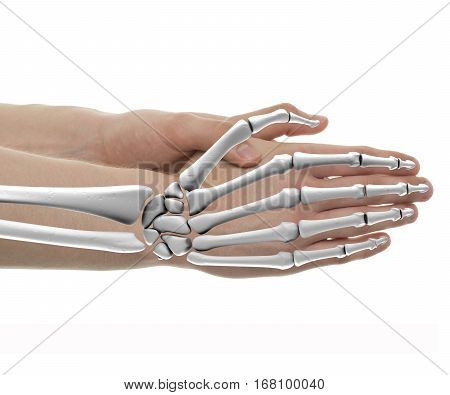 Hand Bones Male Anatomy - Studio Shot With 3D Illustration Isolated On White