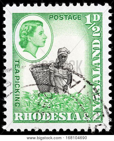LUGA RUSSIA - SEPTEMBER 18 2015: A stamp printed by RHODESIA AND NYASALAND shows image portrait of Queen Elizabeth II against view of Tea Picking circa 1959