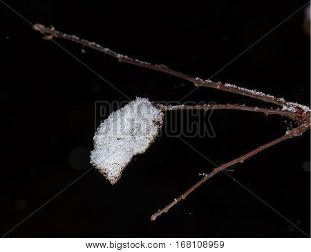Ice and snow on on a branch after a sleet