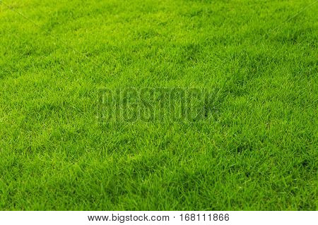 Green grass on a slope, the backyard for the background.