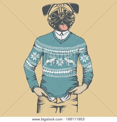 Pug dog vector illustration in human sweater or sweatshirt