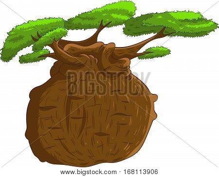 African iconic tree baobab tree single isolated