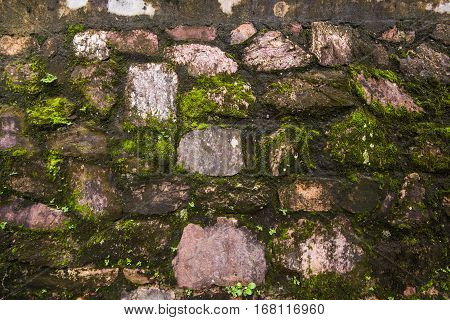 Green moss on the Tomb wall from the old vietnamese temple.