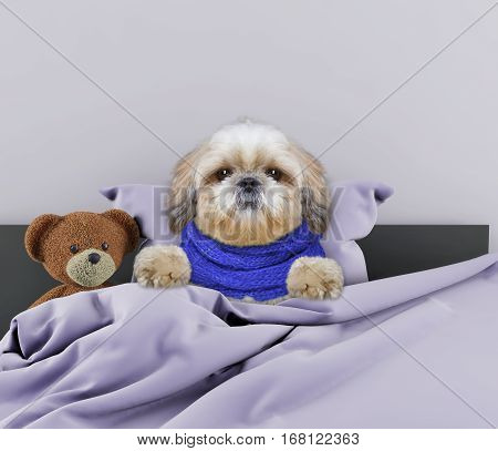 Very much sick cute dog laying in bed with bear