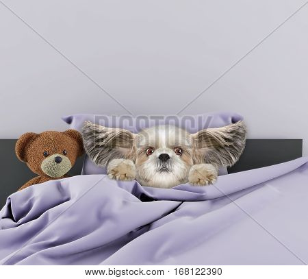 Little cute dog sleeping and afraid of something