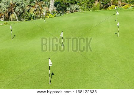 Golf course practice putting green holes flagsticks.