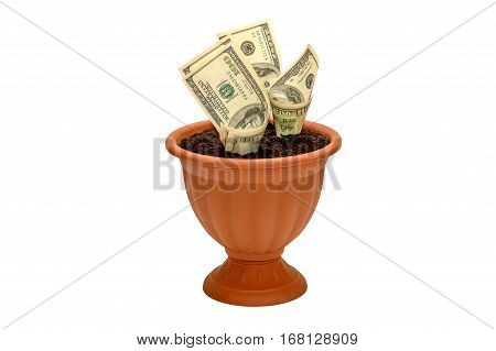 Growing money in flowerpot isolated on white background.