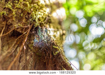 Spiderweb on Tree in Forest with Bokeh Background