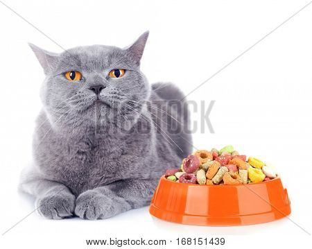 Cute cat and bowl with dry food on white background