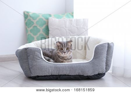 Cute funny cat in bed at home