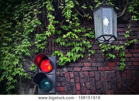 Red and brown brick wall covered in fresh green ivy vines. A lantern hangs among ivy with traffic lights on the bottom. A red light is on. Dark cloudy day