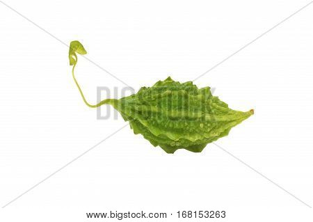 Green bitter gourd on a white background