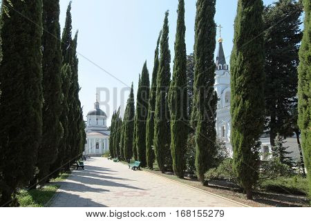 Avenue Of Cypress Trees