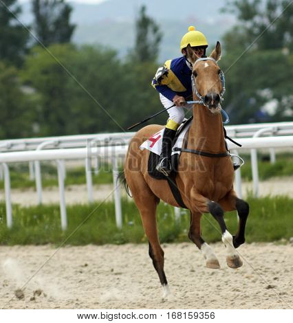 Before horse race for the prize of the Vstupitelni, Russia`s largest hippodrome in Pyatigorsk.