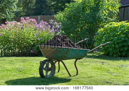 Wheelbarrow full of compost on green lawn in garden.