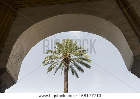 Cordoba (Andalucia Spain): courtyard of the medieval cathedral known as mezquita-catedral with various trees. Arch and palm tree