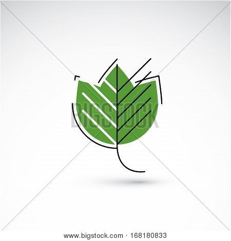 Spring maple tree leaf botany and eco flat image. Vector illustration of herb natural and ecology element best for use in design.