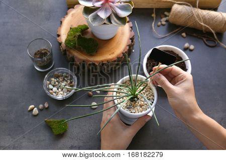 Florist replanting succulent, closeup