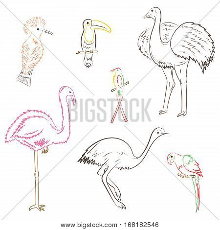 Colorful Hand Drawn Exotic Tropical Birds. Doodle Drawings of Parrot Ostrich Emu Hummingbird Hoopoe and Toucan. Sketch Style. Vector Illustration.