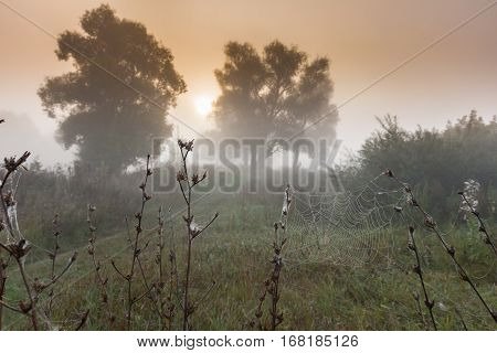 autumn landscape cobwebs on the dry grass in the oak grove in the misty morning at sunrise instagram filter