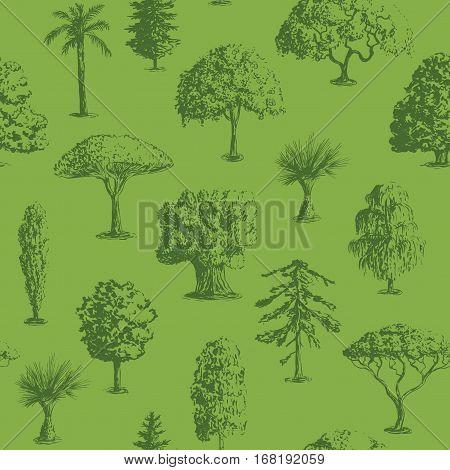 Seamless vector hand drawn tree pattern. Oak, olive, apple-tree, pine, spruce, maple, dragon blood, brahea, cypress, acacia, palm.