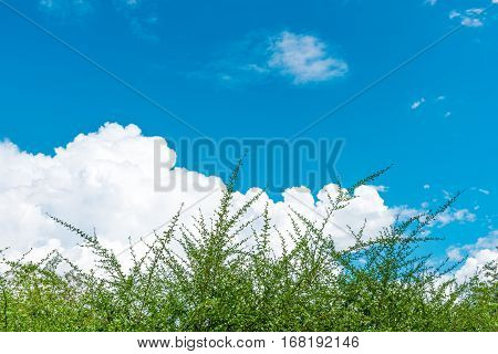 Clouds In The Blue Sky Of Thailand