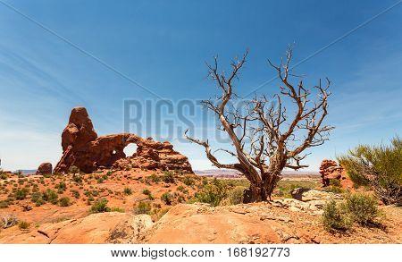 Dry tree on the red rocks background in Utah
