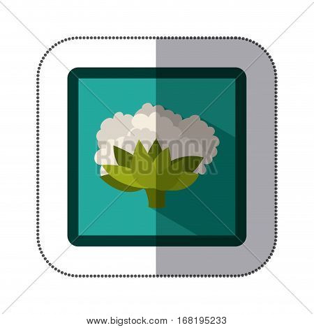 sticker colorful square with cauliflower vector illustration