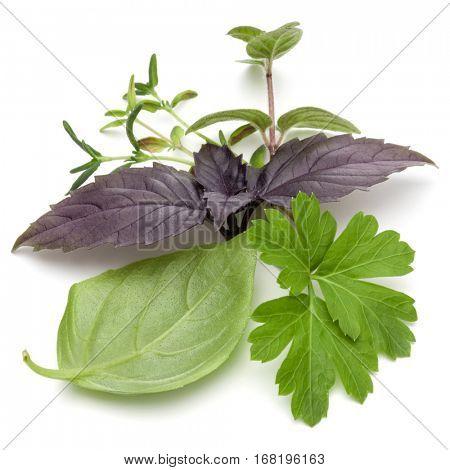 Fresh herb leaves variety isolated on white background. Purple dark opal basil, sweet basil, oregano, thyme,  parsley