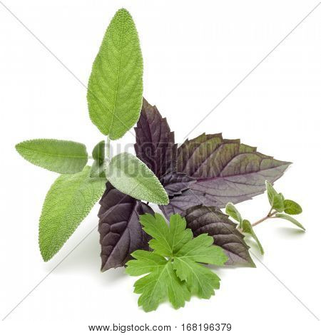 Fresh herb leaves variety isolated on white background. Purple dark opal basil, oregano, parsley, sage