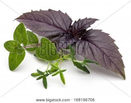 Fresh herb leaves variety isolated on white background. Purple dark opal basil, oregano, thyme, parsley.
