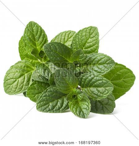 Fresh mint herb leaves isolated on white background cutout.