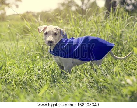 Dog Costume Breed Canine Friend Mammal Animal