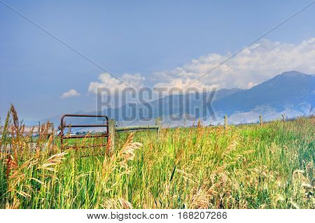 Beautiful vista of a Happy Valley Montana field has scenic view of the Absaroka Mountains. Gate and fence runs length of image.