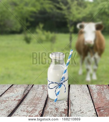 Milk bottle with striped straw. Cow's milk overlooking a meadow with grazing cow.