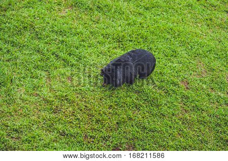 Black Bear Sow In Lush Green Grass